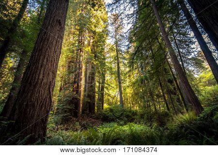 Image of the Redwood National Park during sunset.