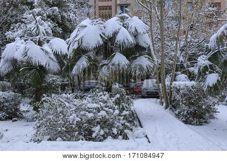 Snowfall in the park. palm trees covered by snow in december