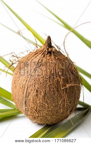 Whole Coconuts And Leaves On White