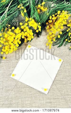 8 March background -mimosa flowers and white card for 8 March text with on the linen tablecloth. 8 March postcard