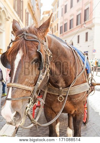 Close up of a traditional horse carriage in Rome in downtown street. Rome, Lazio, Italy.