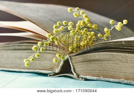 Spring still life - open old book with yellow spring mimosa flowers. Selective focus at the book's spine. Retro tones applied. Spring background with old open book and spring flower of mimosa. Spring still life