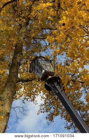 autumn. Yellow leaves on a tree and a lamppost