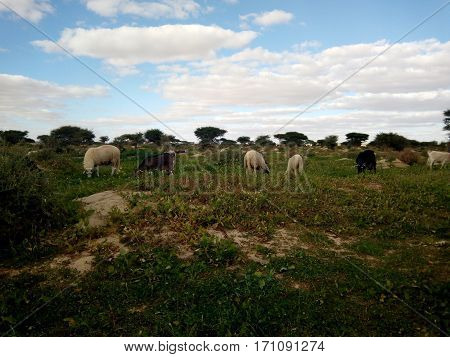a green field with goats around it