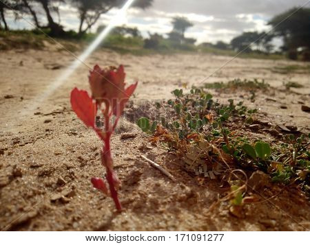 a wonderful red flower in land of africa