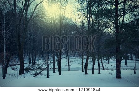 Vintage Scary Landscape In The Forest