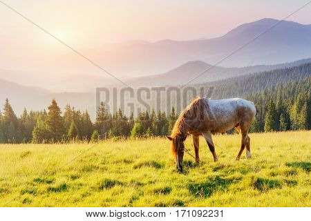 Riding in the mountains at sunset. Carpathians. Ukraine. Europe