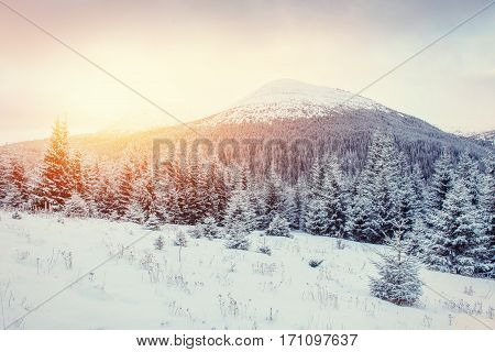 Mysterious Winter landscape with fog, majestic mountains in the winter. Sunset. Magic winter snow covered tree. Dramatic winter scene. Carpathian, Ukraine, Europe