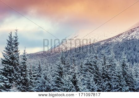 Winter landscape glowing by sunlight. Dramatic wintry scene. Carpathian, Ukraine, Europe. Happy New Year In anticipation of the holidays