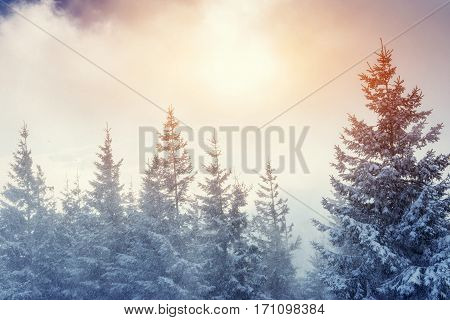 Winter landscape glowing by sunlight. Dramatic wintry scene. Carpathian, Ukraine, Europe. Happy New Year. In anticipation of the holidays