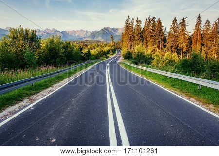 road in mountains. Good lighting tree with sunlight in summer day. Carpathian, Ukraine, Europe.