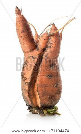 Carrot of unusual form isolated on a white background