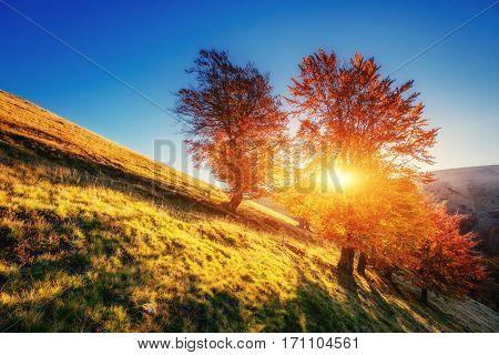 Forest Road in the autumn. Landscape Ukraine Europe.