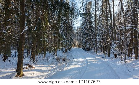 Snowfall after ground road crossing forest in sun, Bialowieza Forest, Poland, Europe