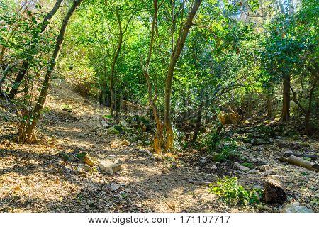 Wadi Lotem In Haifa