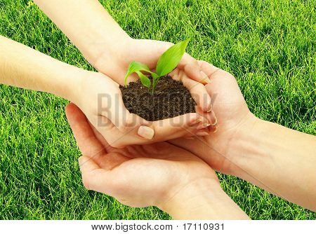 holding a plant between hands on grass