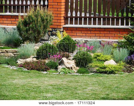 Reddening flowers in a home garden