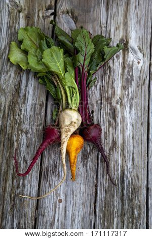 Red, Orange And Yellow Beets