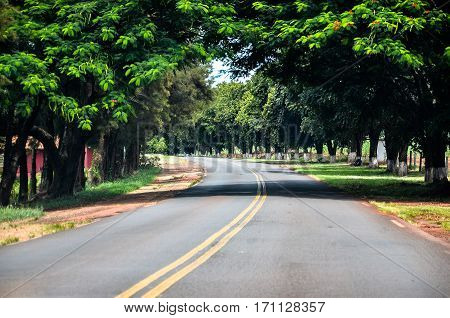 Background: Curve on the road surrounded by trees and green vegetation.