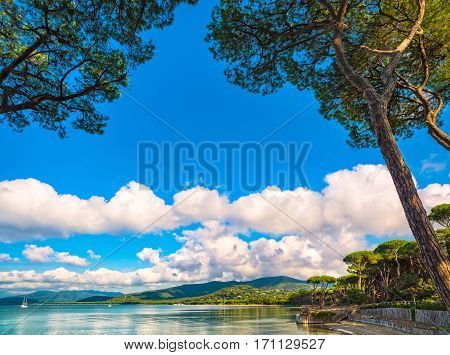 Punta Ala Pine tree group beach and sea bay. Tuscany Italy Europe