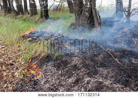 Crawling fire of burning grass in a spring forest