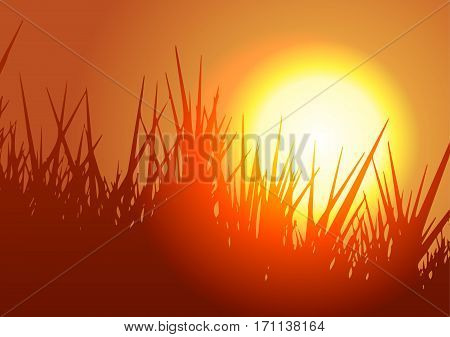 Vector Illustration. Meadow with grass at sunset.