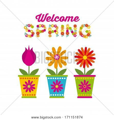 flowers in a pot over white background. spring season concept. colorful design. vector illustration