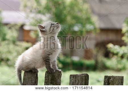 kitten on wooden fence close up