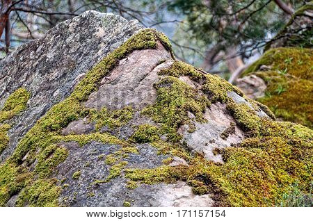 Moss grown on rocks in the Grampians Ranges, Victoria, Australia