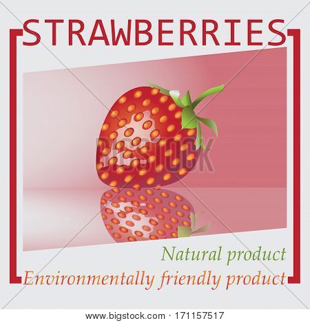 Strawberries. Natural product. An environmentally friendly product. Design for eco-labels. Farmers market, chefs, cooks. Logo, banner, poster, logo. Vector image.