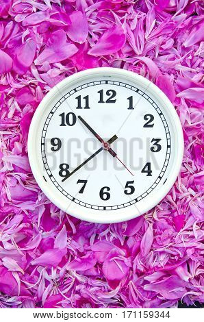 white clock face dial on pink peony flowers petals background