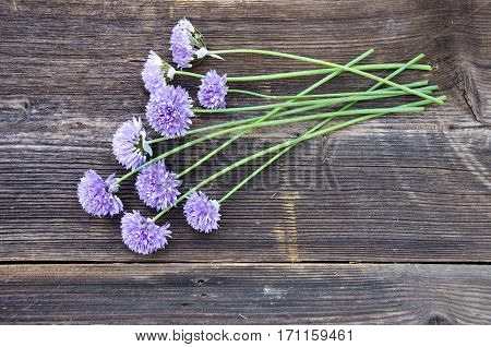 garlic blossom bunch on old wooden plank background