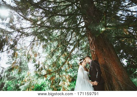 Wedding photo shooting. Bridegroom and bride standing under pine tree. Holding hand of each other with closed eyes. Outdoor, profile
