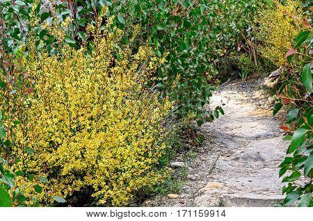 Walking track in the Grampians Ranges of Victoria, Australia