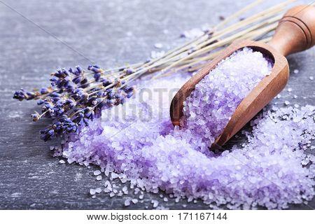 Lavender bath salt and dried flowers of lavender on dark background