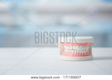 Artificial jaw model on table