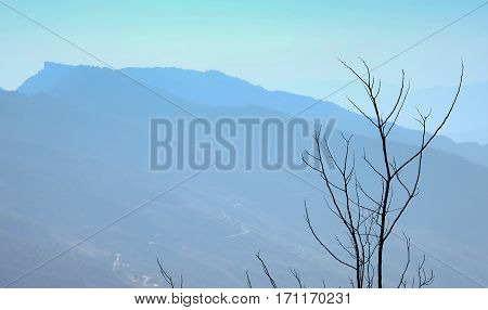 leafless tree branches against the blue sky the mountain is background Chiangrai Northern of Thailand