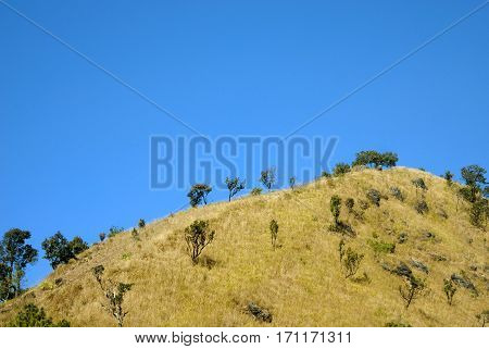Limestone mountain covered by yellow grass field and dwarf green trees against blue sky
