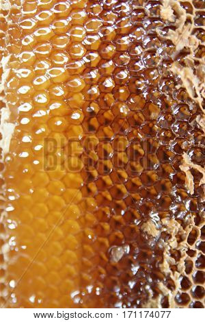 Wax honeycomb with a lot of honey