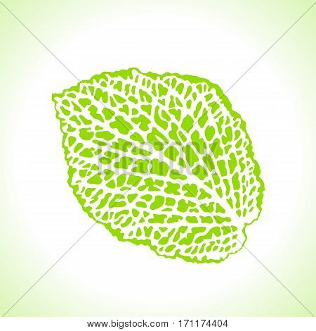 Decorative leaf isolated. Natural detailed macro illustration.