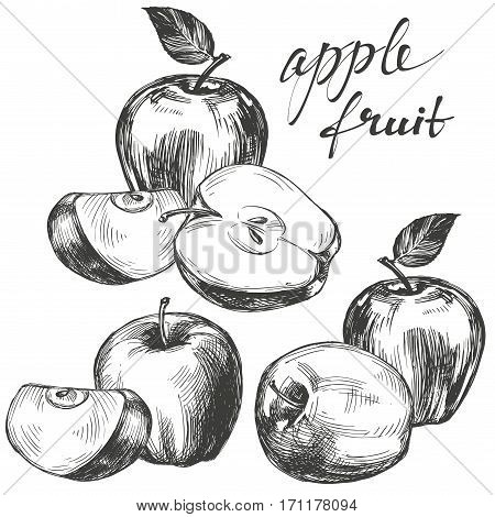 apple fruit set hand drawn vector llustration realistic sketch