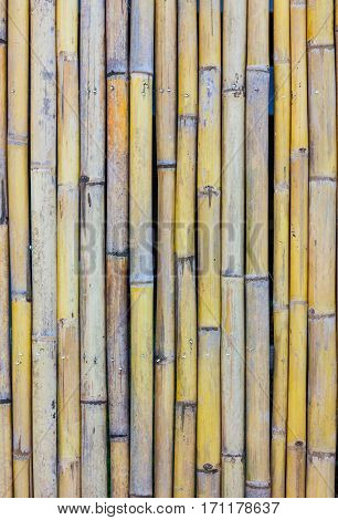 close-up of bamboo fence background in the park outdoor