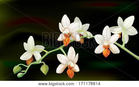Branch with orchid flowers Phalaenopsis Mini Mark. Vector illustration