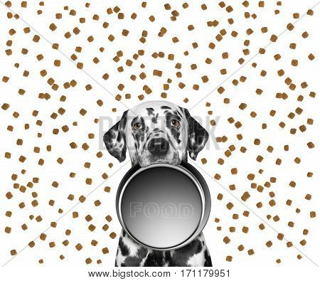 portrait of a cute dalmatian dog and his food bowl