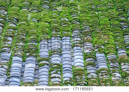 Photo of Mossed Roof Tiles Texture. Old Roof Texture Mossed by Green Grass