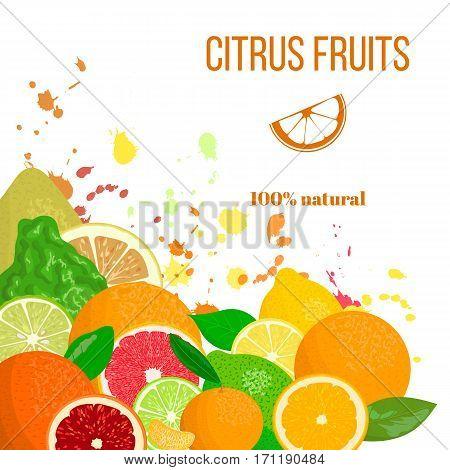 Citrus fruits in the corner. fresh and juicy. Bergamot, lemon, grapefruit, lime, mandarin, pomelo, orange, blood orange with splashes. For cosmetics, fresh bar, store bio products tag label menu