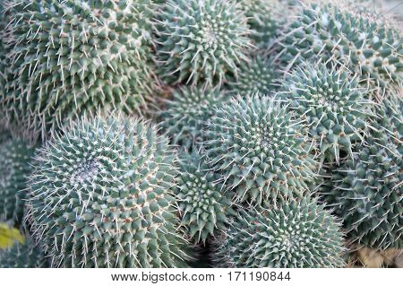 Green Spiky Cactus Flower With Thorns
