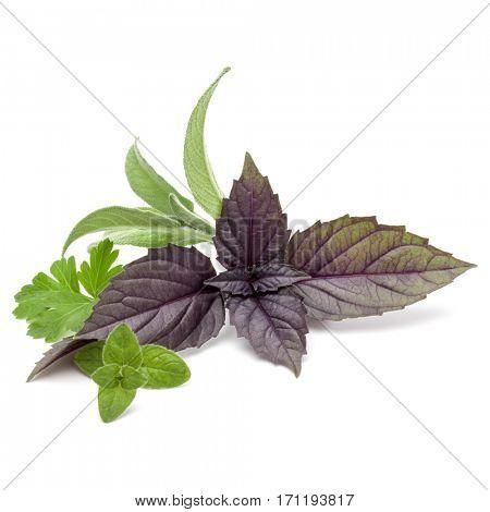 Fresh herb leaves variety isolated on white background. Purple dark opal basil, oregano, parsley, sage.