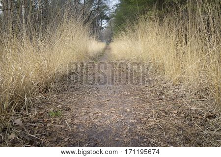Path between golden colored grass giving great perspective in the forest