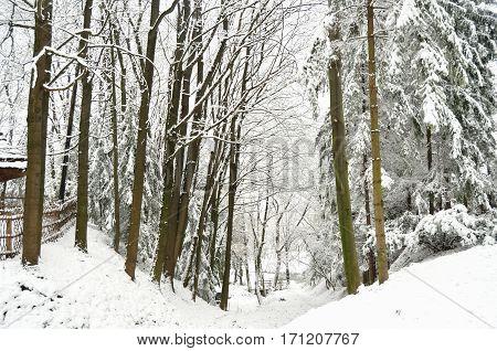Snowbound forest and frozen lake. Skansen Shevchenkivskyi Hai Lviv Ukraine.